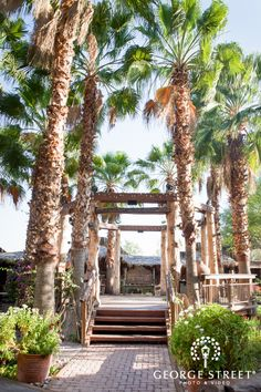 The Boojum Tree is one of AZ's most unique and beautiful event venues. Our Indoor / Outdoor venue is the perfect location for Weddings and Events of all types. Hidden Garden, Outdoor Venues, Event Venues, Cacti, Unique Weddings, Villas, Phoenix, Indoor Outdoor, Reception