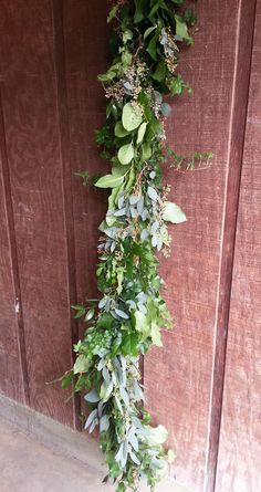 Freshly Cut Salal, Seeded Eucalyptus, Italian Ruscus, Green Ivy Garland