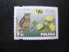 Owl postage stamp, Poland.