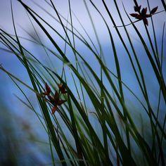 Med Helnæs Bugt i baggrunden  #visitfyn #fyn #nature #visitdenmark #naturelovers #nofilter #natur #denmark #danmark #dänemark #landscape #nofilter #assens #mitassens #vildmedfyn #fynerfin #vielskernaturen #visitassens #instapic #picoftheday #sommer #september #beautiful
