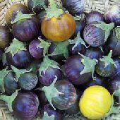 Lao Purple Striped Eggplants EG40-20