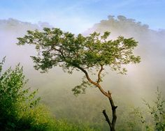Sicahuate by Mark Menjivar. Archival photo print available for purchase at www.ilovetexasphoto.com #texasphoto #ElSalvador #landscape #Retorno #nature