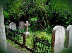 Image result for jungle graveyard