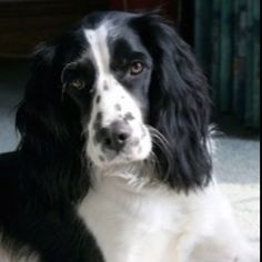 This looks so much like the dog we used to have...still miss having her around ... oh my Maggie girl