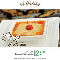 طبق اليوم في #هلا_كافيه في #سيفكو  Dish of the day in #hala_cafe in #Saveco