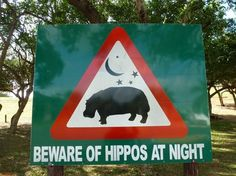 South Africa's most famous hippo town: St Lucia Estuary. Beware hippos and crocs