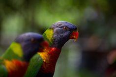 Colorful, Colors, Color, Colores, Bird