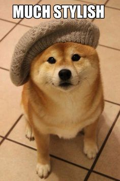 Wow. So hat. Very fashion. Such cute...