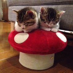 kittens on mushroom pillow