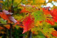 Turning toward Fall by wagn18.deviantart.com on @deviantART