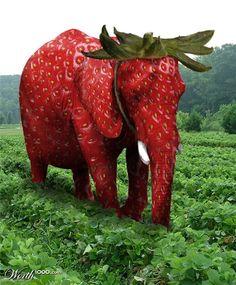 Zo valt een olifant niet op tussen de aardbeien - How do you hide an elephant in a strawberry patch :) Elephant Quotes, Elephant Love, Elephant Art, Rare Animals, Animals And Pets, Funny Animals, Animal Mashups, Animal Memes, Animal Original