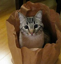 Sweet cat in the sack