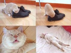 Shoe Smell, Cat got unconcious after smelling this Shoe