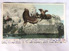 Vintage Seal Rocks, Santa Catalina California postcard postmarked 1910