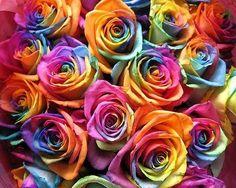 Rosas multicoloridas.