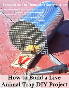 The Homestead Survival | How to Build a Live Animal Trap Project | http://thehomesteadsurvival.com http://fourshrops.wordpress.com/2008/11/24/projects-for-boys-can-trap/