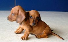 Twin Doxies!