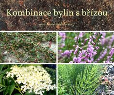 Bříza bělokorá Herb Garden, Home And Garden, Herbs, Plants, Herbs Garden, Herb, Plant, Planets, Medicinal Plants