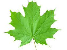 Billedresultat for leaves