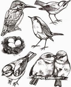 Vogel linksonder vind ik leuk.