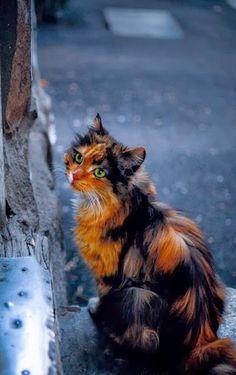 Beautiful Tortie!