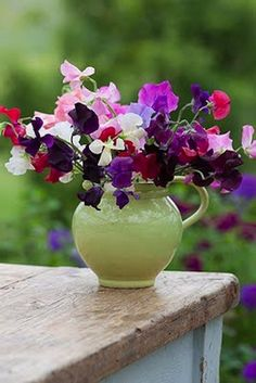 I LOVE these sweet peas (purple and red and white are nice) I like this flower for possible table decs or even in bouqet