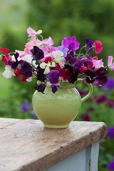 Love using pitchers as vases...  me too plant, bouquet, seed, growing up, wedding flowers, cut flowers, garden, sweet peas, sweetpeas