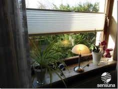ogródek na parapecie - naturalne światło - minimalistyczne projekty - ozdoba parapetów - białe żaluzje plisowane
