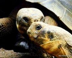2 Schildkröten