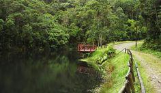 Parque Estadual da Serra do Brigadeiro na região da Zona da Mata, Minas Gerais