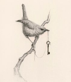 A sweet little Winter Wren holding the means of escape/ unlocker of secrets/ key to the kingdom/ sign of commitment. Keys are so incredibly symbolic I definitely have my own thoughts and feelings about why my birds hold keys but I love the idea of someone owning my work and finding there own symbolism in it. This is the first of a small series of Wrens I'm working on and is unavailable for purchase. (Graphite colour pencil liquid metal gold) by vanessafoley