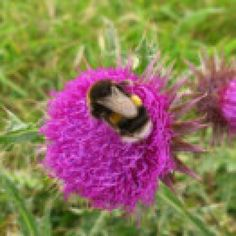 Well done Eastbourne Borough Council in supporting the Bees