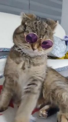 Cat with sun glasses - Cute cats/dogs - Nice cat Funny Cute Cats, Cute Baby Cats, Funny Cats And Dogs, Cute Little Animals, Cute Cats And Kittens, Cute Funny Animals, Funny Animal Photos, Baby Animals Pictures, Cute Animal Videos