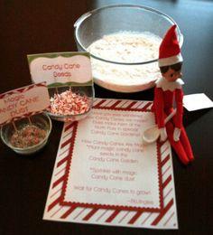 200 Easy Elf on the Shelf Ideas - candy cane seeds All Things Christmas, Christmas Holidays, Christmas Crafts, Xmas, Elf Auf Dem Regal, Elf Magic, Elf On The Self, Buddy The Elf, Merry And Bright
