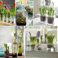 Bloembollen in glazen pot of vaas: http://www.welke.nl/lookbook/welke.nl/Bloembollen-in-glazen-potten-en-vazen