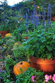 Placing pumpkins in bare spots.   In love with fall, garden bloggers' bloom day - Red Dirt Ramblings®
