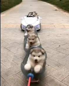 cutest thing I have ever seen. - The cutest thing I have ever seen. -The cutest thing I have ever seen. - The cutest thing I have ever seen. Cute Little Animals, Cute Funny Animals, Funny Animal Memes, Dog Memes, Fluffy Dogs, Cute Animal Videos, Cute Dogs And Puppies, Cute Creatures, Cute Gif