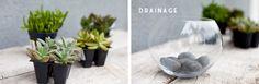 DIY Terrarium [Orange County Photographer]