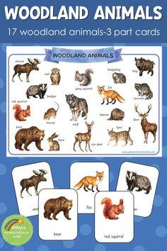 Montessori inspired woodland animals 3 part cards Animal Activities For Kids, Infant Activities, Preschool Activities, Multicultural Activities, Nocturnal Animals, Zoo Animals, Forest Animals, Woodland Animals, September Preschool