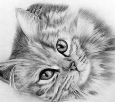 Tabby Cat - via Landscape Pencil Drawings, Pencil Drawings Of Animals, Realistic Pencil Drawings, Animal Sketches, Painting Fur, Scribble Art, Cat Sketch, Color Pencil Art, Cat Drawing