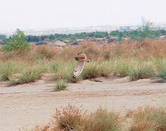 Biodiversity: Not Just a Myth - 2:48AM – Everything Kuwait