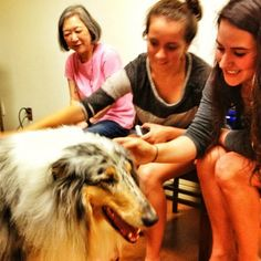 Blizzard was also a huge hit during our Therapy Dogs program!