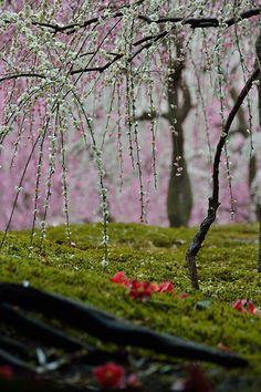 Ume Jonangu #japan #kyoto