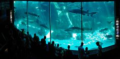 Explore the gems of Cape Town with these beautiful sights that should be top of your list of things to do. Ocean Aquarium, Marine Life, Cape Town, Underwater, Things To Do, Explore, Oceans, Holiday, Beautiful