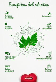 Utilizado como condimento, el cilantro es una hierba que no puede faltar en la cocina mexicana.
