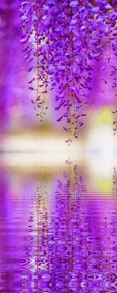 20 Fotografias de Natureza ما أجمله انعكاس ،، خاصة مع اللون البنفسجي الرائع !!