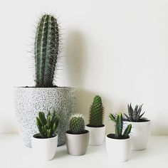 Cute little cactus family  // photo by @paula_kraska