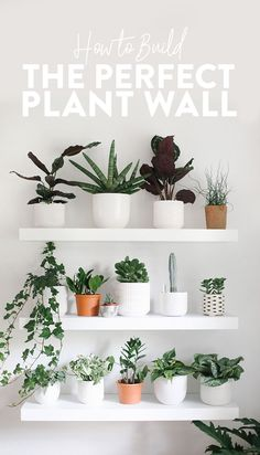 Looking to build a gorgeous, oxygen-filled plant wall in your home? This guide … Looking to build a gorgeous, oxygen-filled plant wall in your home? This guide [. Indoor Plant Shelves, Indoor Plant Wall, Indoor Plants, Indoor Hanging Planters, Shelves With Plants, Plant Wall Decor, Hanging Plant Wall, Patio Plants, Diy Hanging