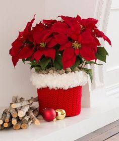 North Pole Pot Cozy