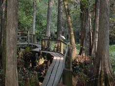 Highlands Hammock State Park...I loved feeding the gators marshmallows. Now your not allowed...lol